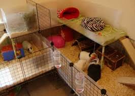 Diy Guinea Pig Cage Ideas Sleevely Guinea Pig Information
